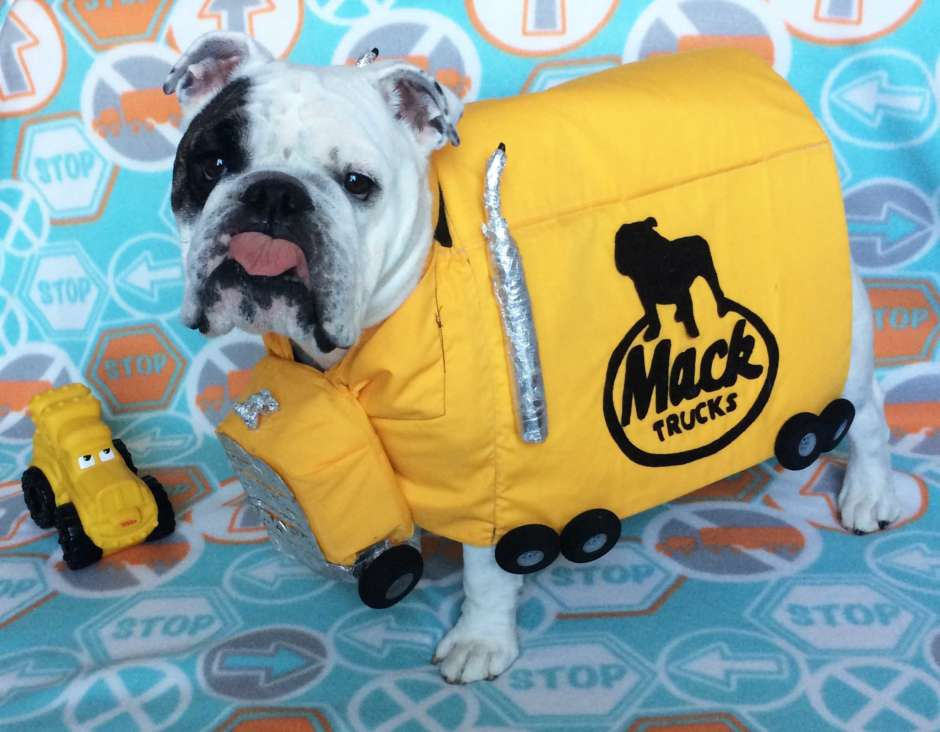 dog mack truck