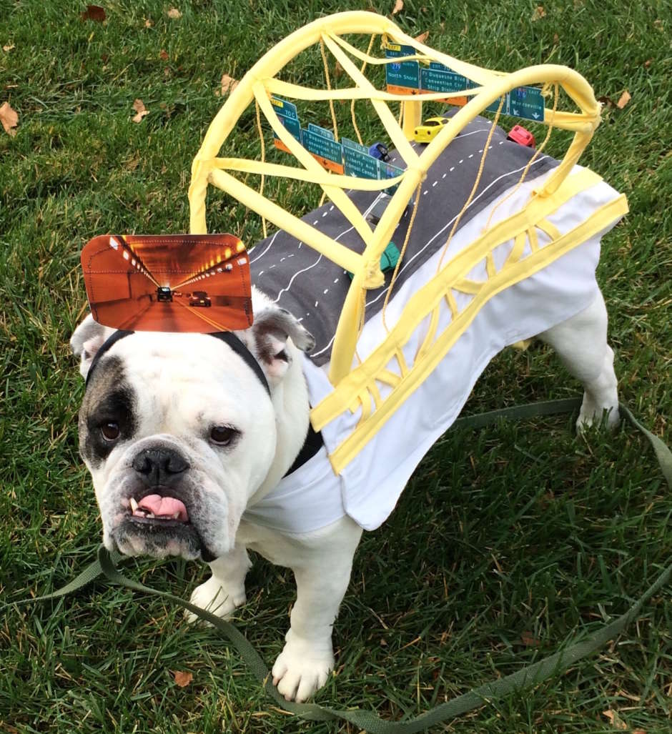 bridge dog costume