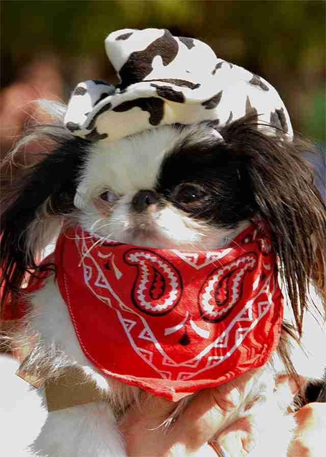 Bulldog 44 Special DIY Cowboy Dog Costume...