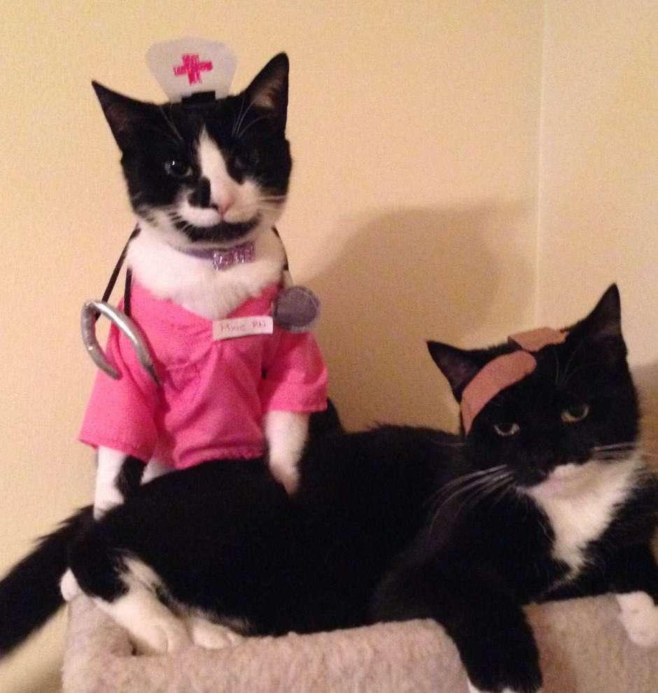 Diy Nurse Cat Costume Nurse Pixie And Her Patient Layla