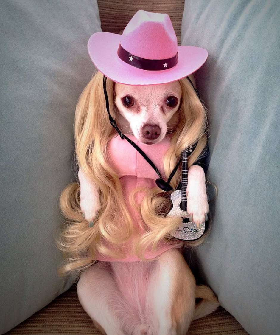 Doggie Parton Dolly Parton Chihuahua Dog Costume