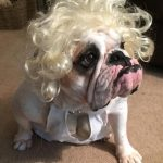 Adorable Marilyn MUTTroe Dog Costume