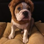 Cute Baby Lion Dog Costume