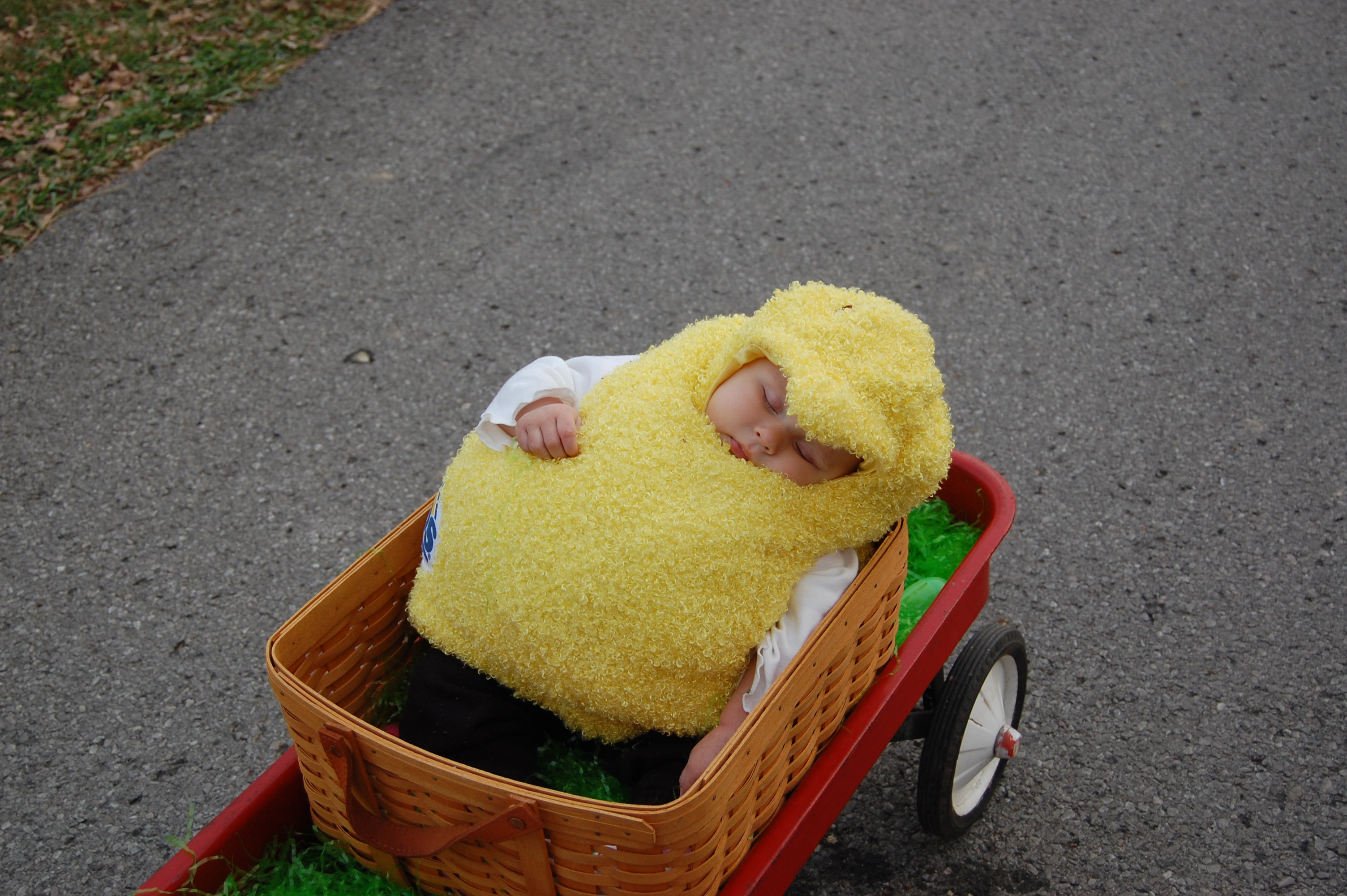 Baby Peep Logan