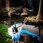 Cute Vaporeon Pokémon Costume for Dogs