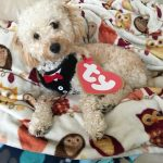 DIY Biscuit the Beanie Baby Dog Costume