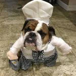 Adorable Chef Costume for Dogs