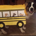 Incredible DIY Dog School Bus Costume