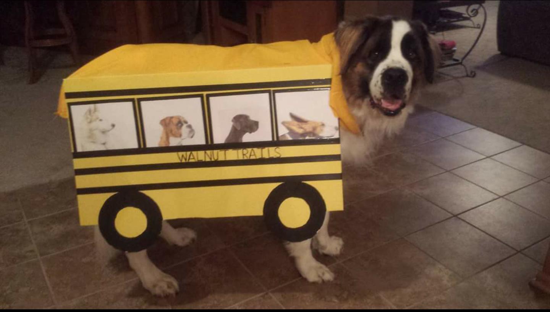 Dog School Bus