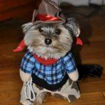 Doggie Cowboy Costume