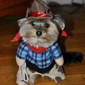 Doggie Cowboy