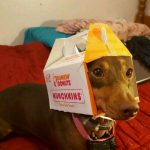 Easy DIY Dunkin Donuts Dog Costume