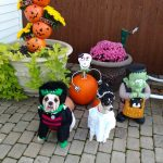 Frankenstein and Bride of Frankenstein Dog Costumes