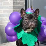 DIY Grape Costume for Dogs