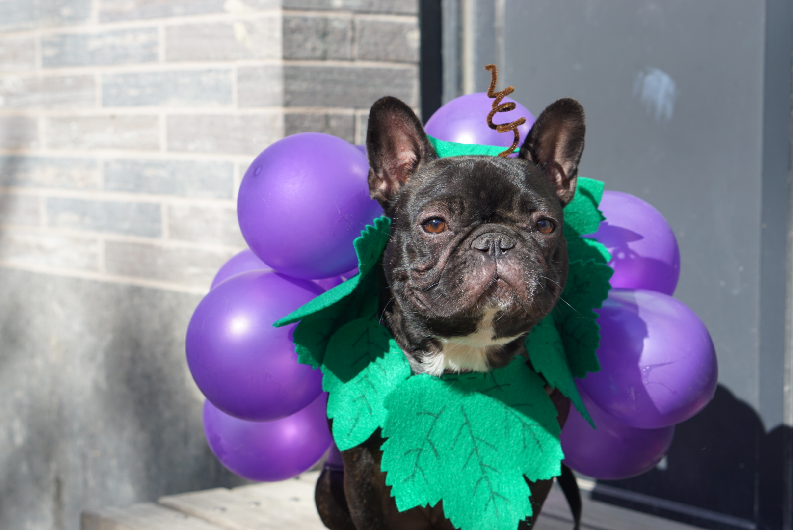 Frenchie grapes