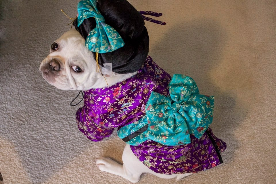 Geisha Dog – Fine, but I'm not putting on the shoes…