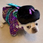 Cute Geisha Dog Costume