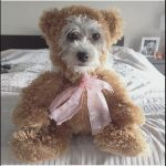 Cute DIY Teddy Bear Dog Costume