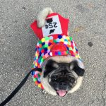 Homemade Gum Ball Machine Costume for Dogs