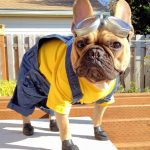 Minion Costume for Dogs (adorable!)