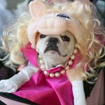 Cute Miss Piggy Dog Costume