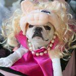 Cute Miss Piggy Dog Costume