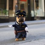 Cute Police Officer Dog Costume
