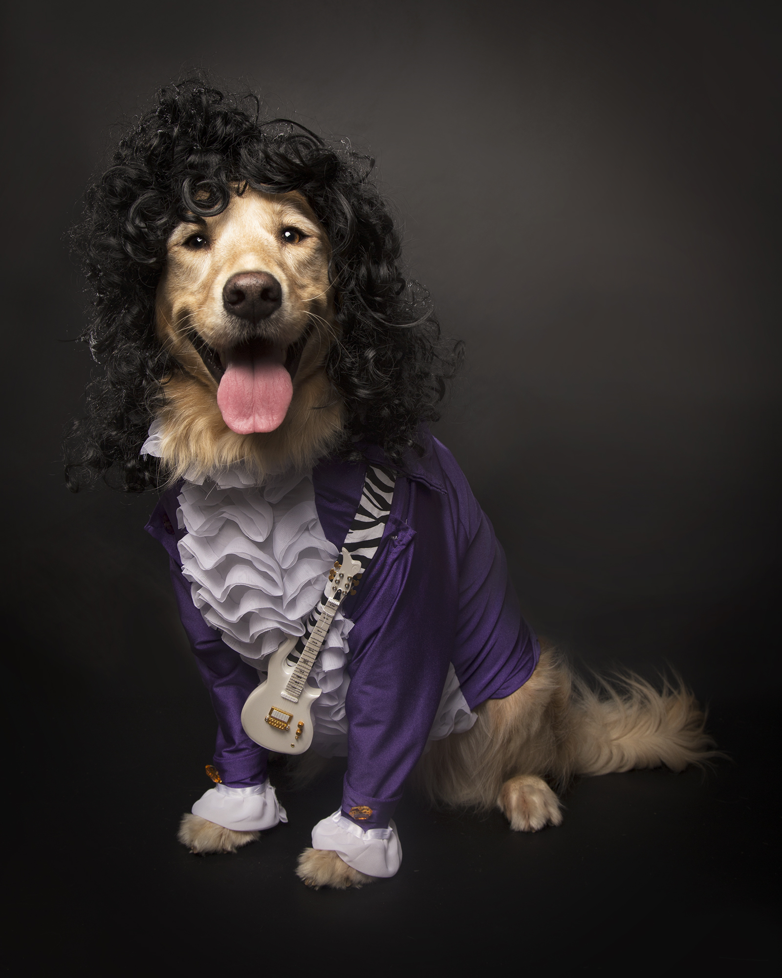 Purple Rain, by The Dog Formerly Known as Olive