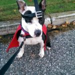Quail Man and Quail Dog Costumes for Dogs and Owners