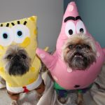 Cute Spongebob and Patrick Dog Costumes