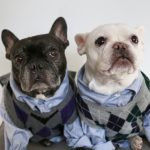 DIY Step Brothers Dog Costume