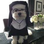 DIY Nun Dog Costume