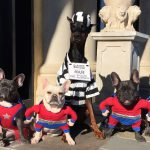 Superhero French Bulldog Group Costume