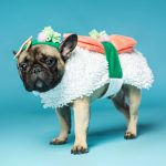 Sushi Roll Dog Costume