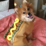Cute Hot Dog Costume for Small Dogs