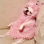 Cute Pig Costume for Dogs