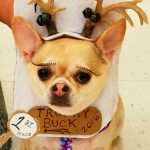 DIY Trophy Buck Dog Costume