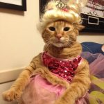 DIY Honey Boo Boo Cat Costume