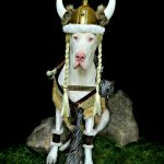 DIY Warrior Wilma Viking Costume for Dogs