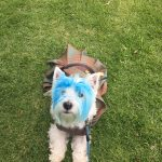 DIY Braveheart William Wallace Dog Costume