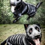DIY Glow in the Dark Dog Skeleton Costume